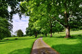 Avenue of trees with a road running through traditional english countryside scene narrow an leafy deciduous on summer day Stock Images