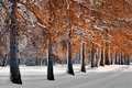 Avenue in winter Stock Photography