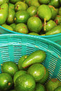 Avocado fruit green background Royalty Free Stock Images