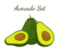 Avocado whole and slice. Tropical summer fruit. Cartoon flat style