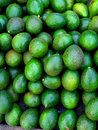 Avogado or schiavo delgado is a fruit cultivated in tropical climates and rich in nutrients and minerals Royalty Free Stock Photography