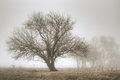 Awe a tree standing majestically in a meadow on a foggy morning Stock Photography