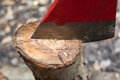Axe blade and trunk a close up shot on the which is stuck in a Stock Images