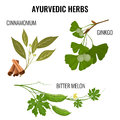 Ayurvedic herbs set of plant branches isolated on white.