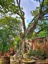 Ayutthaya, Ancient ruins, Old Capital, Bangkok, Thailand