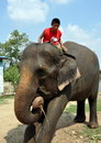 Ayutthaya, Thailand:  Young boy riding an elephant Stock Images