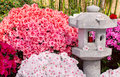 Azalea and asian lantern Royalty Free Stock Photo