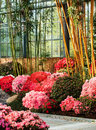 Azalea  and bamboo Royalty Free Stock Photo