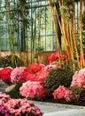 Azalea  and bamboo Royalty Free Stock Photo