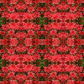 Azalea flower background