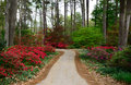 Azalea Walk Stock Photography