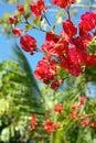 Azaleas and Palms Royalty Free Stock Photo