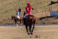 Azione di polo riders girl horse play Immagine Stock