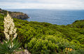 Azorean coastline green on terceira island Stock Photo
