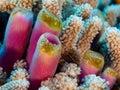 Azure Vase Sponge and Coral Royalty Free Stock Photo