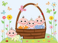 Babies in the basket Stock Images