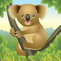 Baby Animal collection: Koala Royalty Free Stock Photography