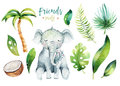 Baby animals nursery isolated illustration for children. Watercolor boho tropical drawing, child cute tropic turtle Royalty Free Stock Photo