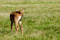 Baby antelope a young is standing alone and looking Stock Photo