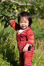 Baby Apple Picking Royalty Free Stock Images