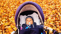 Baby autumn in buggy in the Stock Photos