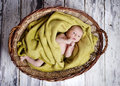 Baby in the basket Royalty Free Stock Images