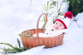 Baby in basket as Christmas present in winter park Royalty Free Stock Photo