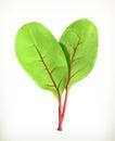 Baby beetroot leaves