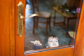 Baby behind closed door Royalty Free Stock Photo