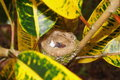 Baby bird newly hatched with eggshell in nest broken of rufous tailed hummingbird costa rica central america Stock Images