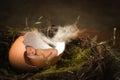 Image : Baby in birds nest   books