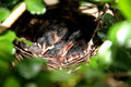 Baby birds in the nest three sleeping happiness on tree Stock Image