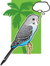 Baby Blue Budgerigar Parakeet Stock Photo