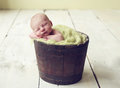 Baby boy in a bucket newborn antique planter Stock Image