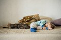 Baby boy and cat sleeping together cute toddler Stock Image