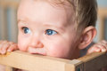 Baby boy chewing the crib`s wooden edge