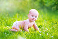 Baby boy crawling in the garden Royalty Free Stock Photo