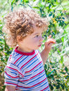 Baby boy exploring outdoor portrait of year old the surroundings of his yard Royalty Free Stock Image