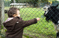 Baby boy feeding the goat through fence Royalty Free Stock Image