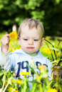 Baby boy play with dandelions Stock Image