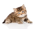 Baby british tabby kitten looking at camera. isolated on white Royalty Free Stock Photo