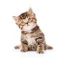 Baby british tabby kitten sitting in front. isolated on white Royalty Free Stock Photo