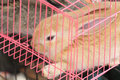 Baby bunny brown in a cage Royalty Free Stock Images
