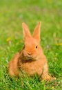 Baby bunny sitting in spring grass on the meadow Stock Photography