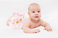 The baby with camomiles a bouquet of pink on buttocks Royalty Free Stock Photography