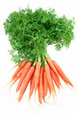 Baby Carrots Stock Photo