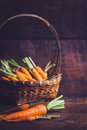 Baby carrots Royalty Free Stock Photo
