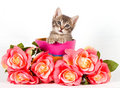 Baby cat Royalty Free Stock Photo