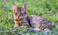 Baby cat lying on green grass. Royalty Free Stock Photo