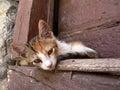 Baby cat relaxing in Greece